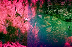 fly fishing with lemurs (adie reed) Tags: slidefilm expiredfilm doubleexposure sanfrancisco eugene flyfishing 35mm film lostfilmfoundfilm crossprocessed doubleexposurewithaboutadecadeinbetweenthetwo lemurs lomo lca