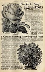 n34_w1150 (BioDivLibrary) Tags: flowers roses jones seeds co catalogs conard nurserystock westgrovepa plantsornamental bulbsplants usdepartmentofagriculturenationalagriculturallibrary bhlgardenstories bhlinbloom conardjonesco bhl:page=42484195 dc:identifier=httpbiodiversitylibraryorgpage42484195