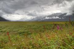 Contrast (blum99) Tags: sewardhighway alaska flowers clouds field anchorage menacing hdr canonefs1585mmf3556isusm