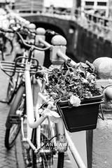Typically Dutch (Charlie Mike Photography) Tags: street city people flower netherlands bicycle canal nederland workshop kanaal portret stad fiets leeuwarden straatbeeld bloem mensen straatfotografie bloembak