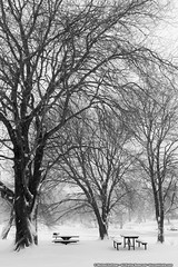 The Lonely Picnic (mhoffman1) Tags: trees winter blackandwhite lake snow monochrome table newjersey unitedstates snowing picnictable collingswood camdencounty g15 haddontownship silverefexpro