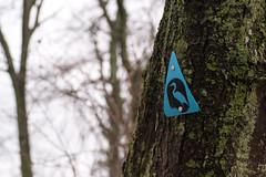 Blue Heron Trail (P.Woolley) Tags: nature nikon massachusetts naturephotography needham cutlerpark needhammass blueherontrail d3100 nikond3100 cutlerparkneedhammass