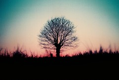 the faraway tree (fotobes) Tags: sunset france tree field grass silhouette lca dusk iso400 branches grain vignetting ratseyeview lahee villepot lomochromepurple