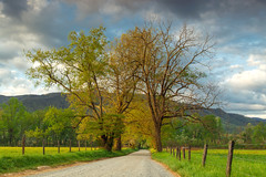 Morning at Sparks Lane (PhotoJacko - Jackie Novak) Tags: morning sky sunlight mountains tree nature clouds landscape country smokymountains cadescove greatsmokymountainsnationalpark leefilter sparkslane bucketlist 2016spring leefilternd6softgnd