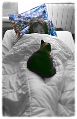a very good morning (L C L) Tags: cat bed bedroom quiet sleep room paz calm pilow gato descansar processing aviary irene cama habitacin edition dormir edicin lcl almohada procesado loretocantero
