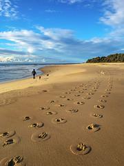 Footprints at Pedro (caralan393) Tags: beach poodles dogs sand walk curves footprints pedro