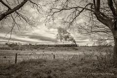 IMG_8664-1B&W (Nimbus20) Tags: trees train steam southern worcestershire westcountry severnvalley kidderminster bewdley greatwestern bulleid 34027 tawvalley