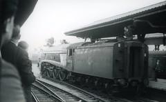 img903 (OldRailPics) Tags: newcastle coast steam east kingfisher british locomotive railtour a4 society railways ltd preservation 60024