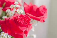 IMG_4165 (Josy'ta) Tags: rose rosas rosascolombianas flowers flores flor diadosnamorados love