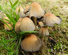 2012-09-29 Mushrooms (beranekp) Tags: nature mushroom czech pilze esk stedoho hruovka