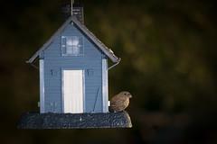 174-366-2 (garyinhere) Tags: bird oklahoma outside unitedstates sony flash feeders fargo bokah a99