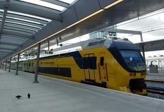 De Groene Toptrein type VIRM (bcbvisser13) Tags: virm degroenetoptrein trein station perron overkapping duiven utrechtcentraal utrecht nederland eu nederlandsespoorwegen ns michielvansinderen
