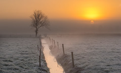 Let the thaw begin (zebedee1971) Tags: light orange cloud sun tree ice water field grass yellow fog sunrise fence wow stream frost ditch cattle cows farm farmland lone farmer hue irrigation paddock
