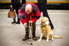 Centraal Station, Den Haag (ingehoogendoorn) Tags: people dog man station train thenetherlands streetphotography trains denhaag hond smoking centraalstation thehague guidedog roken mensen waitingforthetrain spits blindman straatfotografie blindegeleidehond ochtendspits blindeman