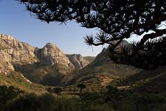 Haggier Mountains, Socotra, Yemen (valerian.guillot) Tags: tree blood dragon ngc yemen hadramaut socotra yémen