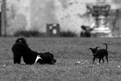 (cinzia_wuthering heights) Tags: dog dogs animals cane tiere perro hund perros animales animali hunde cani