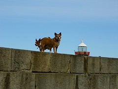 Howth Harbour - 25.03.2015.......  ...   #Howth #Harbour #Sea #Pier #Fish #Boat #Wall #Transport #Water #Bird #Seal #Marine #Mammal #Wave #Gull #Dog #Lighthouse #Blue #Sky #Sign #Bouy #Canine #Woof #Walk #Pup #Pooch #Spring #Dublin #Ireland #Europe #Flick (Mel Byrne) Tags: blue ireland sea sky howth dublin dog lighthouse fish building green bird tower water woof beautiful sign rock stone wall architecture marina fun mammal pier boat photo spring friend marine europe flickr pretty harbour yacht walk wildlife gull transport wave canine seal pup bouy capture pooch madra