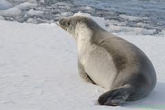 _DSC1180 (Roy Prasad) Tags: ocean travel cruise sea sunlight mountain snow reflection ice expedition water rock landscape boat ship crystal sony antarctica glacier seal sound iceberg zodiac prasad a7 70200mm a7ii crabeater crystalsound royprasad a7m2 ilce7m2
