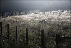spring time (anjan58) Tags: newzealand spring lamb pastoral wishing