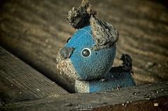 I'm blue da ba dee da ba, die... (Szydlak Szk) Tags: blue urban dog cute abandoned rural toy moody sad plush spooky nostalgia dirt forgotten attic nostalgic lonely lovely dust exploration derelict hdr forlorn urbex stara szk zabawka sadworld rurex abandonato oncewashome szydlak