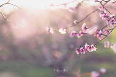 Primavera (gianniliguoriphotographer) Tags: spring dream canon85mm12l eos6d canonef85mm12l