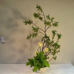 Donna's #ikebana,  lovely