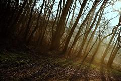 Mirkwood (thomas druyen) Tags: wood las light les forest la o an bosque bos landschaft wald floresta forêt hutan metsä bosc foresta skogen orman 숲 林 лес šuma erdő arbaro heiter padurea шума ліс ป่า miško meža rưng الغابة היער δασοσ वन フォレスト ойн foraoise ტყის ilforesti гората