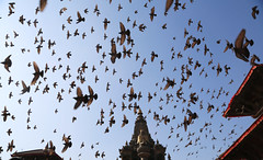 Holy Apparitions (Guillaume (www.gcpic.com)) Tags: nepal square temple pigeon holy kathmandu hinduism patan durbar boudhism
