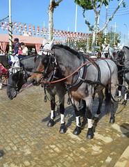 Feria 2015 Sevilla (DAGM4) Tags: españa horse color primavera caballos sevilla spain europa fiesta colores andalucia sur tradicion feriadesevilla feriadeabril