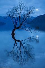Salix fragilis (Atlapix) Tags: blue autumn newzealand lake reflection tree nature dusk willow southisland otago wanaka lakewanaka salix crackwillow brittlewillow salixfragilis