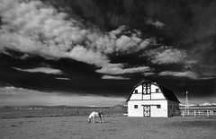 the MacMillan Barn - B&W version (eDDie_TK) Tags: blackandwhite bw rural colorado weld farming barns co farms rurallife ruralliving weldcounty whitebarns weldcountyco johnstownco