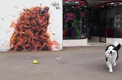 """Jack arrte d'embter Nounours"" (HBA_JIJO) Tags: bear street urban dog chien streetart france art animal wall painting graffiti artist view scene spray peinture rue mur ours vitry vitrysurseine paris94 hbajijo"