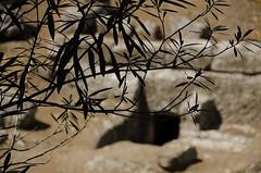 Necropolis Banditaccia. Cerveteri (Italy) (Anacronimo.) Tags: ruins graves cerveteri tombe rovine ruderi necropoli scavi