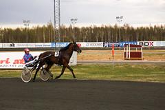RP1C0019 (edxge84) Tags: sport trav bana spel boden 2016 hästar sporten hästarna lopp v64 travet 12maj kuskar peabtravet bodentravet