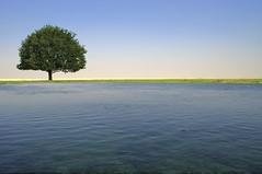 The Lonely Tree - Irkaya Farm - Qatar (zai Qtr) Tags: blue sky tree green nature water outdoor weekend shams qatar naturalmusic irkayafarm zaiqtr