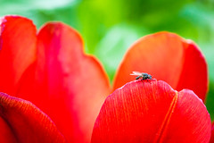 Do not disturb (Guill_B) Tags: flower macro fleur se sude landskrona skneln