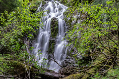 DSC09467.jpg (jjdun7) Tags: travel nature water oregon creek forest river landscape countryside waterfall stream lifestyle environment landforms 2016 2015 sardinecreek