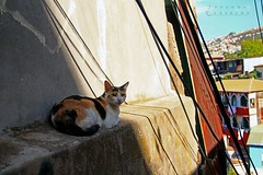 Cat (LEJZA) Tags: chile sunset sol animal cat valparaiso shine colores gato tarde calor cerroalegre
