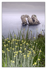 Arnia 006 (KANPAZ) Tags: flowers sea summer green yellow see mar nikon paisaje alegria angular cantabria quebrada cantabrico liencres urros d7000 puertaalmar