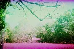 Psychedelic Hut (Ludovic Macioszczyk Photography) Tags: psychedelic hut gomz cosmic symbol 135 lomography xpro 200 iso cross processed ludovic macioszczyk analog photography film pellicule photo photographie argentique keep alive ludos photographs france life shoot art picture world m 2014 sun 35mm light camera contrasts summer exposure outside holiday ludo love vacances traitement croisé négatif développement scan 1 2 3 4 5 6 7 8 9 extérieur fr vintage appareil polychrome lumière vie © corrèze paysage campagne leaks tag monde couleurs colors