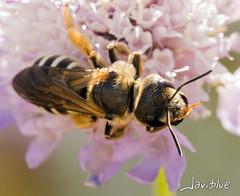 Te observo (javiblue25) Tags: espaa naturaleza flores insectos macro zaragoza bichos macrofotografa
