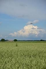 OO-SSM (DST_2602) (larry_antwerp) Tags: steenokkerzeel belgium belgi          aircraft vliegtuig veld field airbus a319112 brusselsairlines a319