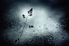 Rainy Day (aveyardphotography) Tags: rain raindrops glass grass wet cold mono monochrome black white
