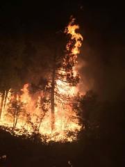 20160615-FS-UNK-0001 (USDAgov) Tags: fire us az whiteriver wildfire cedarfire
