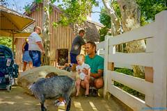 1998_07~026 (If you didn't film it, it didn't happen!) Tags: california animal outdoor goat photograph amusementpark 1998 sixflagsmagicmountain losangelescounty jackmiller candacemiller tabithamiller