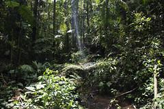 Sun beam through the rainforest canopy (k8moonevans) Tags: travel trees costa sun water america river rainforest costarica central rica beam adventure jungle centralamerica tirimbina