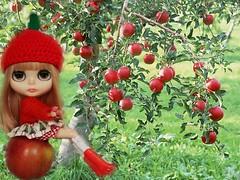Blythe A Day March 11, 2015  Apple