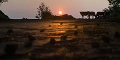 Sunrise On The Road (udithawix) Tags: sunrise