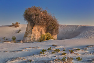 The Mighty Cottonwoods of White Sands National Monument