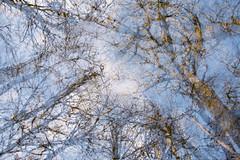 winter trees 03 (Rosie Gosden) Tags: trees winter snow cold scotland movement icm intentional intentionalcameramovement lendrick